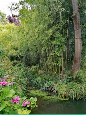 une partie des bambous